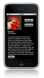 rooster on iphone picture